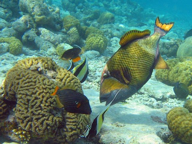 coral-reef-587728_640