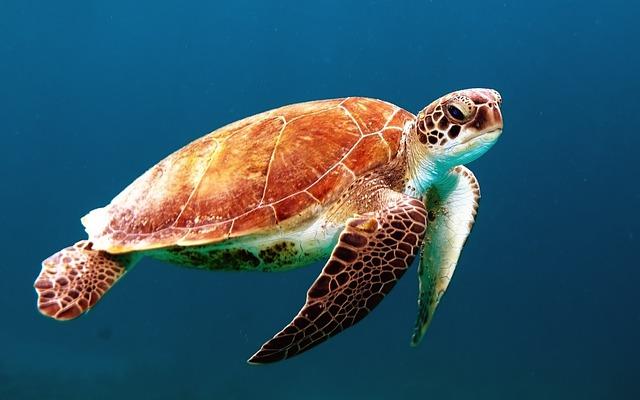 turtle-863336_640